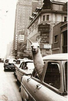 NYC 1957