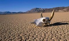 death valley - Google Search