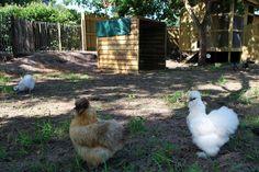Sanguinet: la petite ferme aux animaux des Oréades