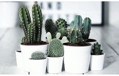 The cactus plant adds a little southern flare to any wedding, and can be a great wedding decor accent. Here are some of our favorite cactus decoration ideas. Succulent Species, Plant Species, Cactus E Suculentas, Belle Plante, Decoration Plante, Plants Are Friends, Decoration Originale, Deco Floral, Green Plants
