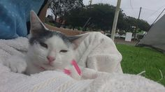 La pequeña Anny esperando ser adoptada.
