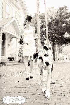 Great Dane. Love this shot!