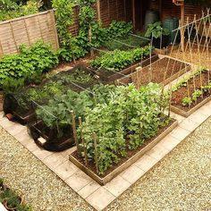 Isn't this the perfect vegetable garden designed for a small space.. So achievable too markwillis #marksvegplot#vegetablegarden #smallgarden