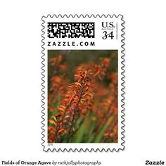 Fields of Orange Agave Postage Stamp