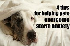4 tips for helping pets overcome storm anxiety