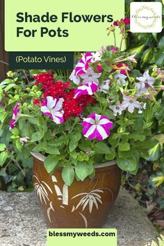See 10 sexy shade flowers for pots on your porch. Why settle for cute when you could have showy plants that love the shade? #blessmyweedsblog #shadeflowersforpots #shadeflowers Raised Garden Planters, Backyard Planters, Vegetable Planters, Rustic Planters, Herb Planters, Decorative Planters, Flower Planters, Best Flowers For Shade, Shade Flowers