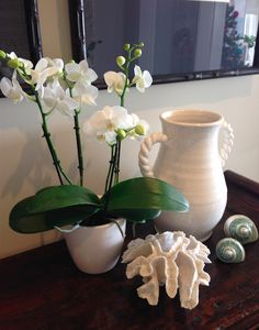Orchid, coral and shells styled by Ornella Botter Interiors.