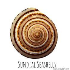 Sundial #seashells.