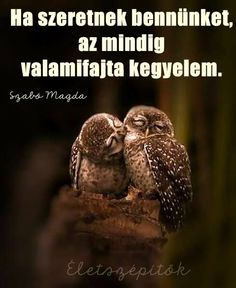 60 Cute Owl Pictures – Some Interesting Pictures For You To Enjoy - Tail and Fur Cogito Ergo Sum, Words Quotes, Sayings, Owl Pictures, Cool Lyrics, Dalai Lama, True Words, About Me Blog, Wisdom