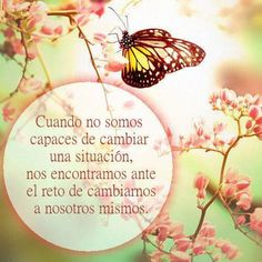 Frases mariposas - Imagui