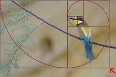 La sezione aurea e la fotografia | Phototutorial - Corso di fotografia on line