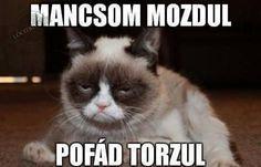 Grumpy cat jokes, grumpy cat funny, funny grumpy cat …For more hilarious humor… Grumpy Cat Quotes, Meme Grumpy Cat, Gato Grumpy, Cat Jokes, Funny Cat Memes, Memes Humor, Funny Cats, Funny Animals, Grumpy Kitty