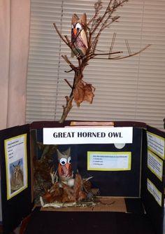 Great Horned Owl Habitat project Science Projects, School Projects, Projects For Kids, Project Ideas, Kids Homework, Homework Ideas, Baby Owls, Owl Babies, Owl Habitat