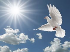 Vleugels van Vrede