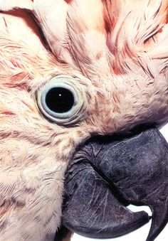 C is for Cockatoo We love how this pretty pink and gray cockatoo naturally mixes textures — a snapshot taken from our Fall inspiration board.