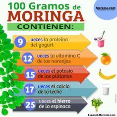 Nutricion de la Moringa                                                                                                                                                                                 More