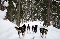 Whistler has much more than skiing! Read about some action-packed winter fun for your trip!
