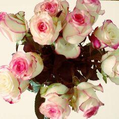 Birthday-Roses from my mum #roses #flowers #rosen #blumen #nature
