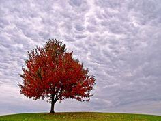 autumn trees - Google Search