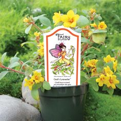 "Available year-round, we offer a selection of more than 40 different varieties of ""fairy"" plants for all your miniature garden offerings. Fairy Garden Plants, Fairy Gardening, Fairies Garden, Sensitive Plant, Parts Of A Flower, Apple Valley, Beautiful Fairies, Garden Shop, Trees And Shrubs"