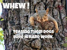 Hasil gambar untuk naughty squirrels