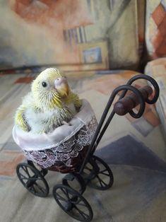 parrot. Absolutely adorable. ... #parrotpet