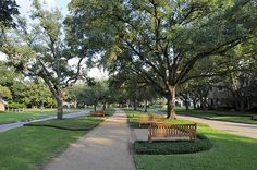 Tanglewood Boulevard is lined with live oak trees that were planted by the Tanglewood Garden Club decades ago.  This beautiful esplanade also has benches to allow walkers to relax and enjoy the serene surroundings. John Daugherty, Realtors.