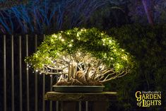 The Garden of Lights 2018 will feature a walk through Heathcote's five acres of Gardens illuminated with thousands of handcrafted, light displays. Garden Of Lights, November 23, Botanical Gardens, Bonsai, Gate, Friday, Gallery, Shop, Plants