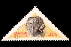 Hungarians have the best stamps! This one features a Puli. Pumi Dog, Hungarian Puli, Herding Dogs, Dog Show, Stamp Collecting, Postage Stamps, Dog Breeds, Old Things, Snail Mail