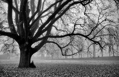 tree soul - Pinned by Mak Khalaf Copyright  2015 ILARIA CERUTTI - PAVIA - ITALY - All rights reserved Fujifilm X-T1 XF23mmF1.4 R ƒ/2.0 23.0 mm 1/800 200 Flash (spento non attivato) ilariac ilariacphotography Black and White blackbreathmeditationmindnaturetreewhite by IlariaC_photography