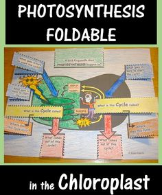 Photosynthesis Foldable - Practice QUIZZING yourself on the process of photosynthesis and all the characters involved! Biology Classroom, Biology Teacher, Science Biology, Teaching Biology, Science Education, Life Science, Ap Biology, Biology Review, Biology Lessons