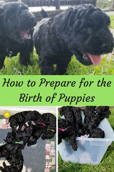 How to Prepare for the Birth of Puppies - As with all newborn puppies they were beautiful little creatures that brought a lot of joy to every - Newborn Puppy Care, Newborn Puppies, Baby Puppies, Cute Puppies, Cute Dogs, Dogs And Puppies, Dalmatian Puppies, Havanese Puppies, Yorkie