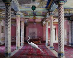 artist Karen Knorr wanted to celebrate the visual richness found in the fables, myths and stories of northern India using sacred and secular sites to highlight the caste system, femininity and its relationship with the animal world.