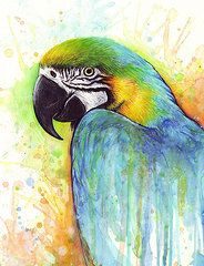 Colorful Macaw Parrot Painting  by Olga Shvartsur