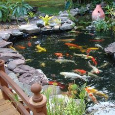 Koi pond by Backyard Getaway www.backyardgetawayponds.com