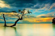 Sunset Tree, The Philippines