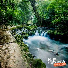 Tambaque; lugar de agua bajita. Es un balneario natural de aguas cristalinas, donde el agua nace al pie de la sierra.  #WeLoveAdventure  www.rutahuasteca.com  +52 481 381 7358 WhatsApp: 481.116.5900 email: info@rutahuasteca.com #RutaHuasteca #SLP #Ecoturismo #TurismoDeNaturaleza #VisitMexico #Tours #TodoIncluidotata