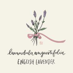 lavender | KARMOMO