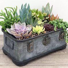 Succulent Care Discover World of Succulents Succulent Landscaping, Succulent Gardening, Succulent Terrarium, Container Gardening, Organic Gardening, Vegetable Gardening, Herb Container, Vintage Gardening, Container Flowers