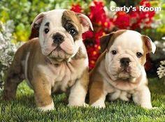 puppy bulldog art - Google Search