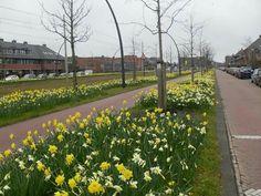 Wateringse veld, Den Haag - 160320