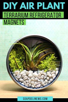 How to make a magnetic air plant terrarium to display on your refrigerator. A quick Terrarium Diy, Air Plant Terrarium, Small Terrarium, Terrarium Wedding, Terrariums, Plant Art, Plant Decor, Activities For Kids, Crafts For Kids