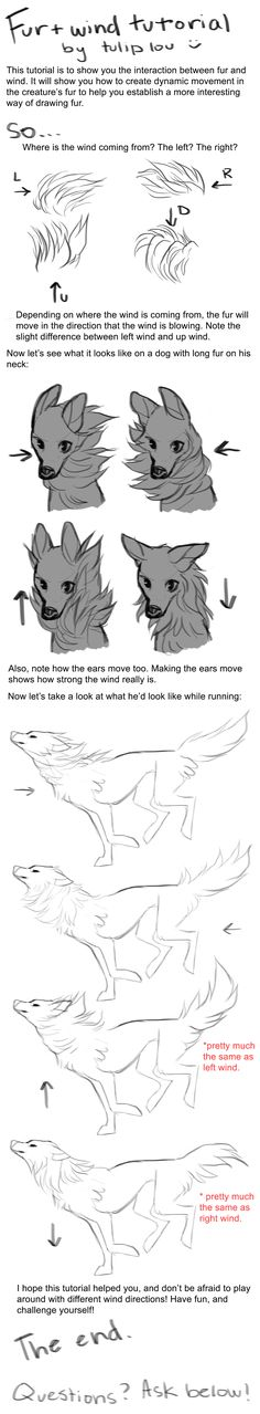 Wind and Fur Tutorial by tuliplou Drawing Tips, Drawing Tutorials, Art Tutorials, Drawing Fur, Wind Drawing, Cartoon Drawing Tutorial, Drawing Skills, Drawing Techniques, How To Draw Fur