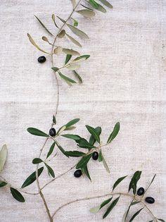 olive branches | Con Poulos