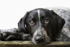 6 signs ur dog is secretly living in pain >ilovedogssite.com