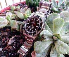 Rolex and succulents. by odin4343 from Instagram http://ift.tt/1UQJQqD