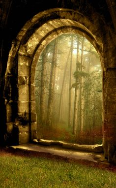 ~~The gateway to enlighenment ~ through a misty and magical forest by maiarcita~~