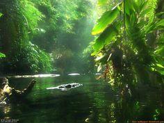 The Amazon River, Brazil  Why You Should Save the Amazon Rainforest «The S.P.A.C.E Program