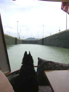 """Sailor taking it all in on one of his many adventures. This time transiting the Panama Canal aboard trimaran Ladyhawke! Sailor stars in the story """"Lost Sailor"""" in """"Everyone Said I Should Write A BooK"""" Please like us on fb: https://www.facebook.com/EveryoneSaidIShouldWriteABook"""