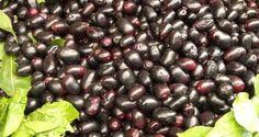 6 health benefits of jamun (Indian blackberry)